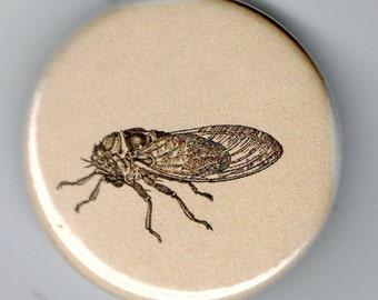 Cicada Tree Hopper 1.25 inch BUTTON Vintage Image