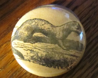 Ermine/Weasel 1 inch pinback Button Vintage Image