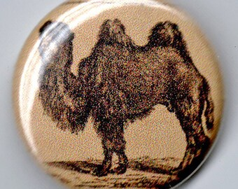Dromedary/Camel 1 inch pinback Button Vintage Image