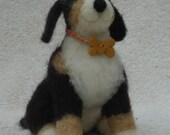 Maya the Bernese Mountain Dog