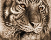 TIGER pencil portrait GLOSS PRINT 8x11 inch. - AnimateArt