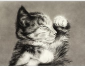 Sweet Dreams Cat Kitten Maine Coon Art Print Glossy Goth Zindy Nielsen - zindy