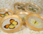 Vintage Butterfly Coaster Set from the Far East