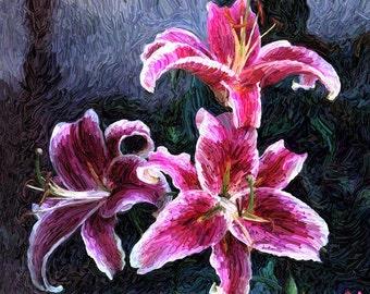 Star Gazer Lily Limited Edition Giclée Print