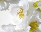 Small Flowers - white and yellow - one dozen