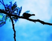 Bird On Wire - Silhouetted Blue Bird  - 5 inches by 5 inches- Nature Photography-Bird Photography