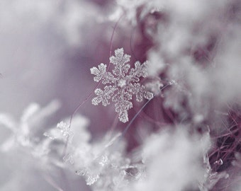 Snowflake -Winter Photography- Fine Art Print-Original -5inches by 7 inches-Winter - Macro-Wall Art-Wall Decore-Home Decore-Purple and White