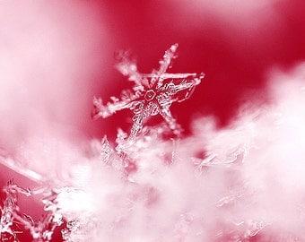 Snowflake Photograph, Winter Photography, Fine Art Print, Winter, Macro Photography, Red, Wall Art, Wall Decore, Ready to ship