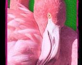 Flamingo 2D Refrigerator Magnet