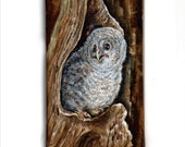 original painting  BABY Tawny Owl - acrylic handpainted