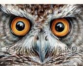 Original 9x7 Watercolour Eyes of Owl  .. NOT A PRINT ..Original Painting owl bird night eyes