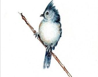 Original 7x9 Watercolour Tufted Titmouse5. NOT A PRINT ..Original Painting blue