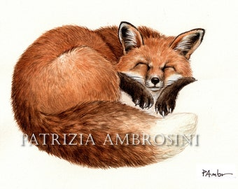 ACEO PRINT - Sleeping foxy -open ed.- animal collectible card red fox
