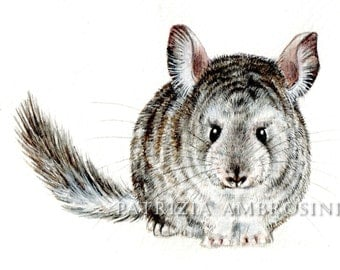9x7  original watercolour. chinchilla.. nOT a pRINT ..original painting animal art. fluffy.rodent.grey