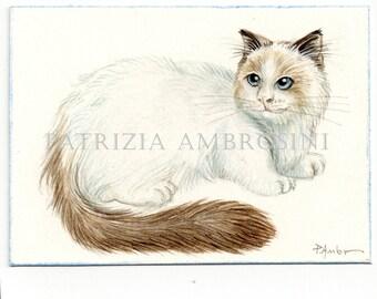 ACEO Original -RAGdoll No.1- Collectible miniature painting ....watercolour card nature