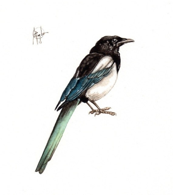 Original 7x9 Watercolour  European MAGPIE. ......NOT A PRINT ..Original Painting black
