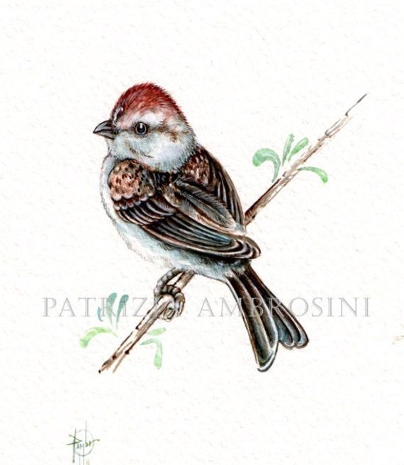 Chipping Sparrow Original 7x9 Watercolour. ......NOT A PRINT ..Original Painting
