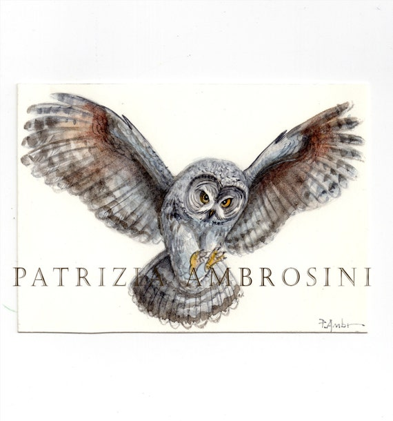 ACEO Original -Owl- Collectible miniature painting ....watercolour card nature
