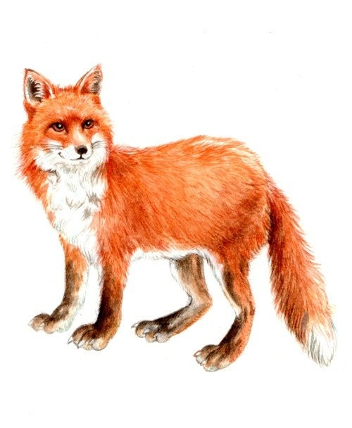 Original 9x7 Watercolour Red Fox No 3 Not A Print