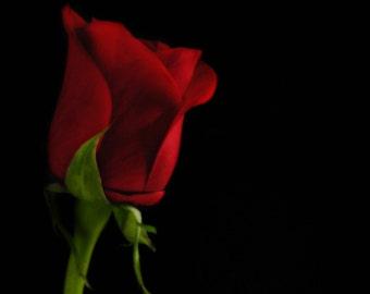 KISS MY ROSE - Artisan Natural Perfume oil