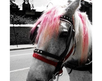 Horse Photography - Horse with Hot Pink Mane - White - Western Decor - Black and White Portrait - Horse Lover Gift - Punk Rock Horse