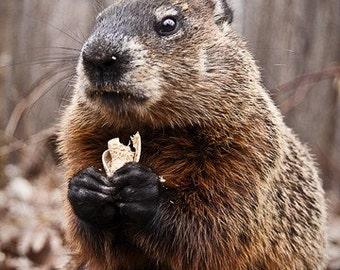 5x7 Print - Monsieur Marmot