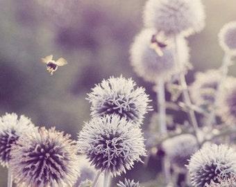Floral Photography - Flower Art 5x7 Print - Bee in Flight - Purple - Mauve - Lavender - Allium - Bokeh