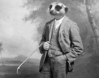 Funny Animal Photography - Meerkat in a Suit - 5x7 Print - Golf Gift - Vintage - Black and White Photography - Father's Day - Antique