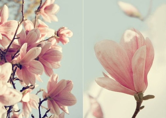 Magnolia Tree - Spring Flower - Pink Blossom - Flowering Tree - Soft Pastel - 5x7 Floral Home Decor - Diptych Style Photo - Muted Color