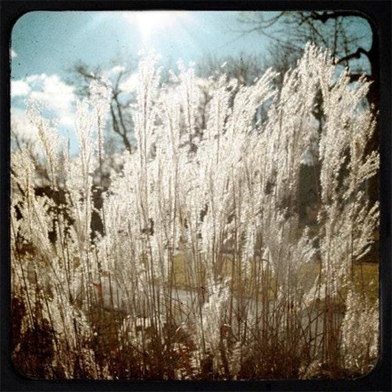 8x8 Print - Wild Wheat