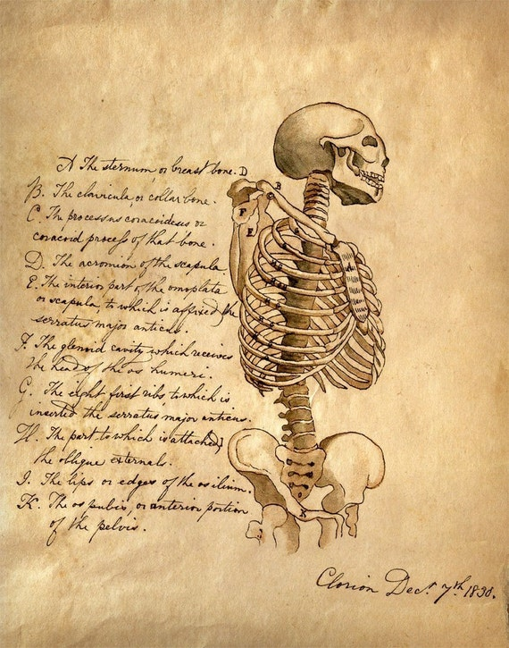 Vintage Anatomical Drawing Vintage Anatomy...