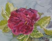 Rugosa rose Roserie de l'hay original watercolour 6 in x 6 in 15cm x 15cm