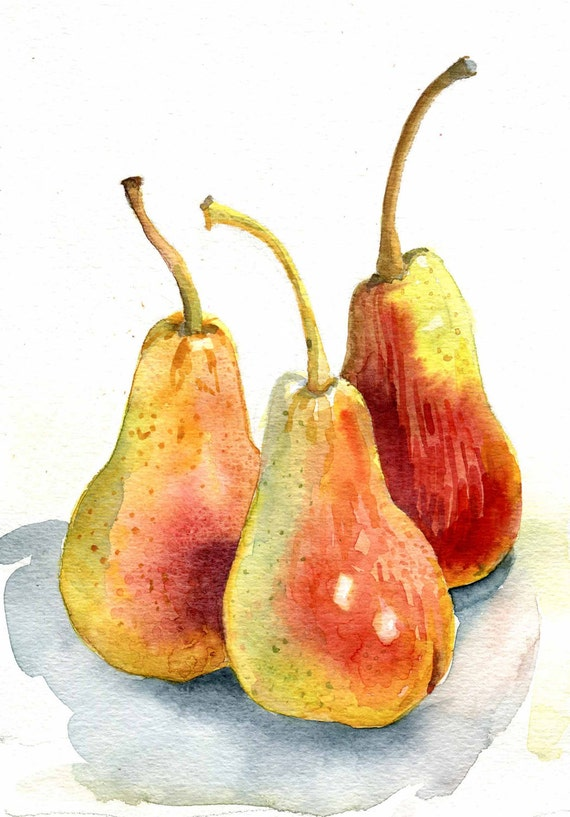 Three Flushed Pears, watercolour painting  8 in x 6in 20cm x 15cm approx