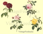 Roses Clip Art Digital Stamps PNG Files Digital Download No 260