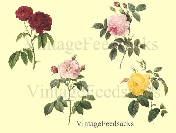 Roses Clip Art Digital Stamps PNG Files Digital Download No 260