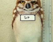 Burrowing owl youngster :-)