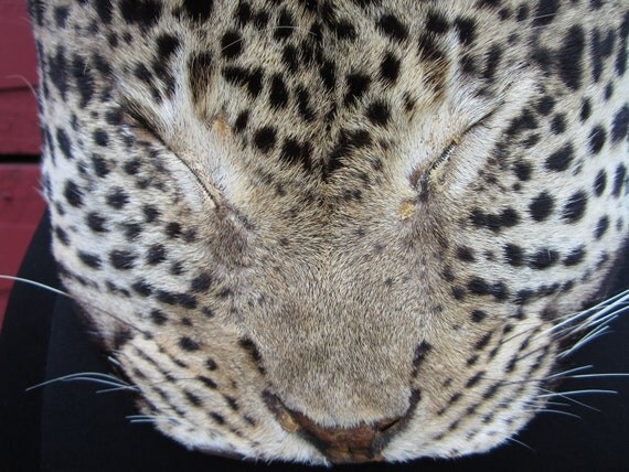Vintage Leopard BOB Cat Print Fur Leather Cat Face Brass Belt