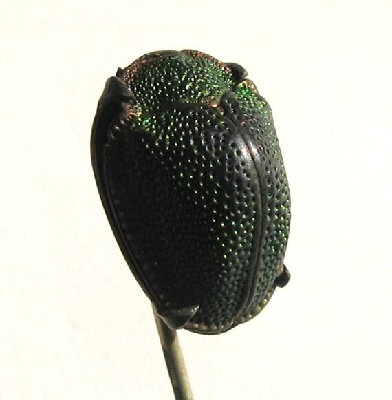 Beetle Victorian scarab  Pin Hat Pin Scarf- 11572