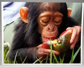 Ruby Red Lips  - A Special Baby Notecard - Orphaned Chimp - greeting card - stationary