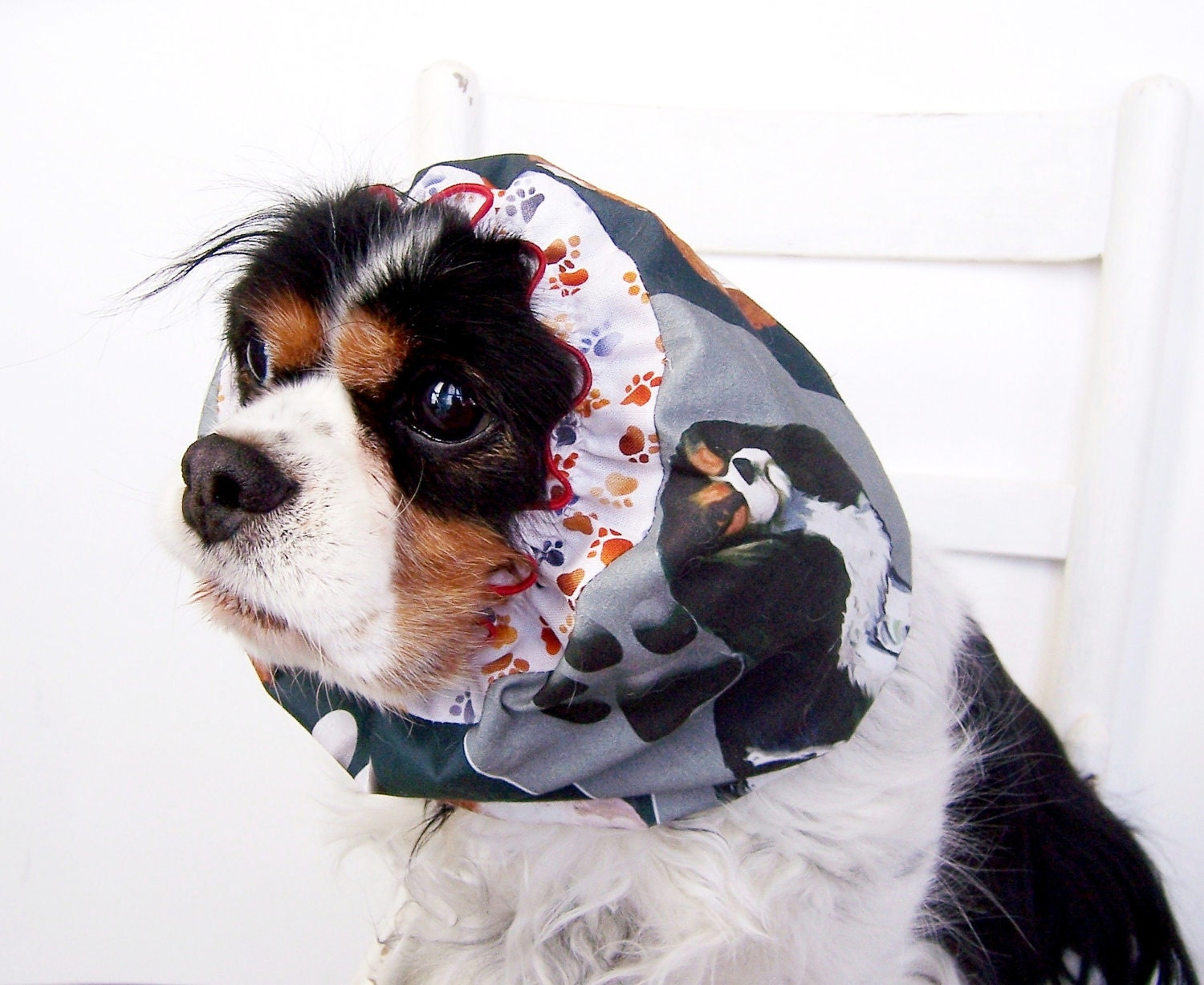 Reserved For Joanne Cavalier King Charles Spaniel Dog Snood