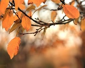 Photo download Autumn photography Fall leaves Burnt Orange brown Tree branches Printable art
