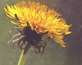 Digital download Dandelion photo Indian summer Country home decor Peaceful Fall autumn at the country