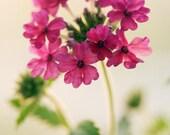 Digital download Neon Pink Flower photo Summer decor Neon wall art magenta fuchsia