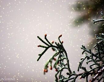 Snowy winter photo - Digital download