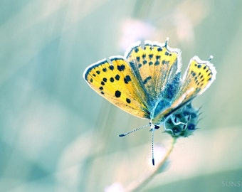 printable art Digital download Butterfly photograph Spring photography nature whimsy sage aqua gold