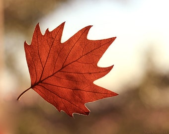 Photo download Autumn photography leaves Fall maple leaf orange red rust printable art