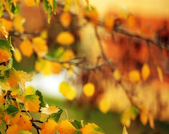 Download photo Autumn fall leaves Autumn photography Mustard yellow green orange Downloadable