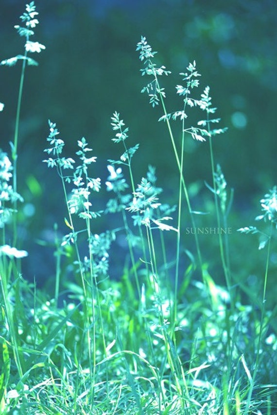 Digital download Teal green home decor downloadable file Nature fine art photography