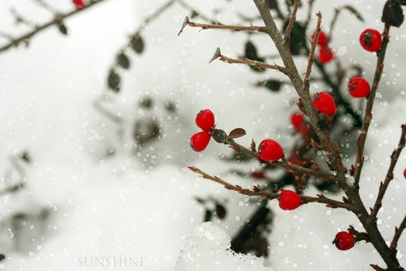 Winter photo - Snow - red white home decor - Any size up to 20x30 digital download