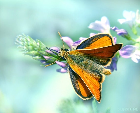 Digital download Butterfly photo download Whimsy nature Light blue turquoise orange baby nursery decor